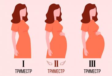 Беременность. Развитие плода
